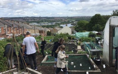 Year 6 and Reception at the allotment!