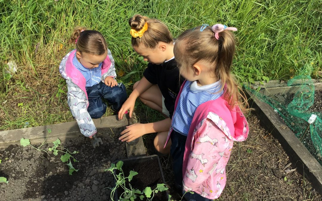 More fun at the allotment!